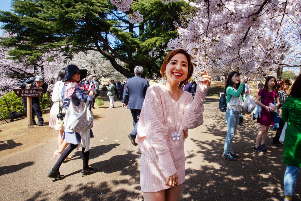 A Japanese girl stands by cherry blossoms at a busy hanami event