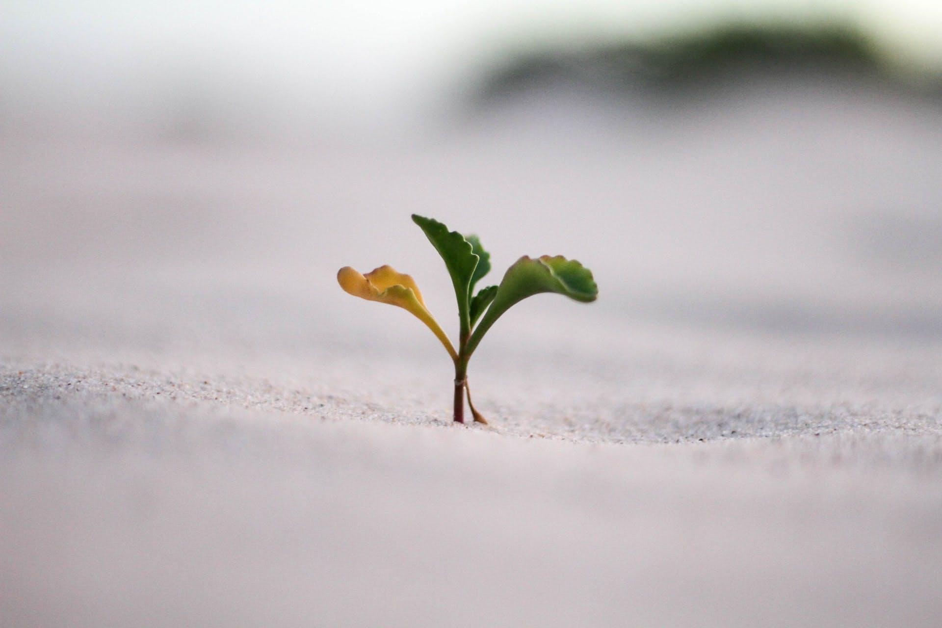 Crescimento de uma planta