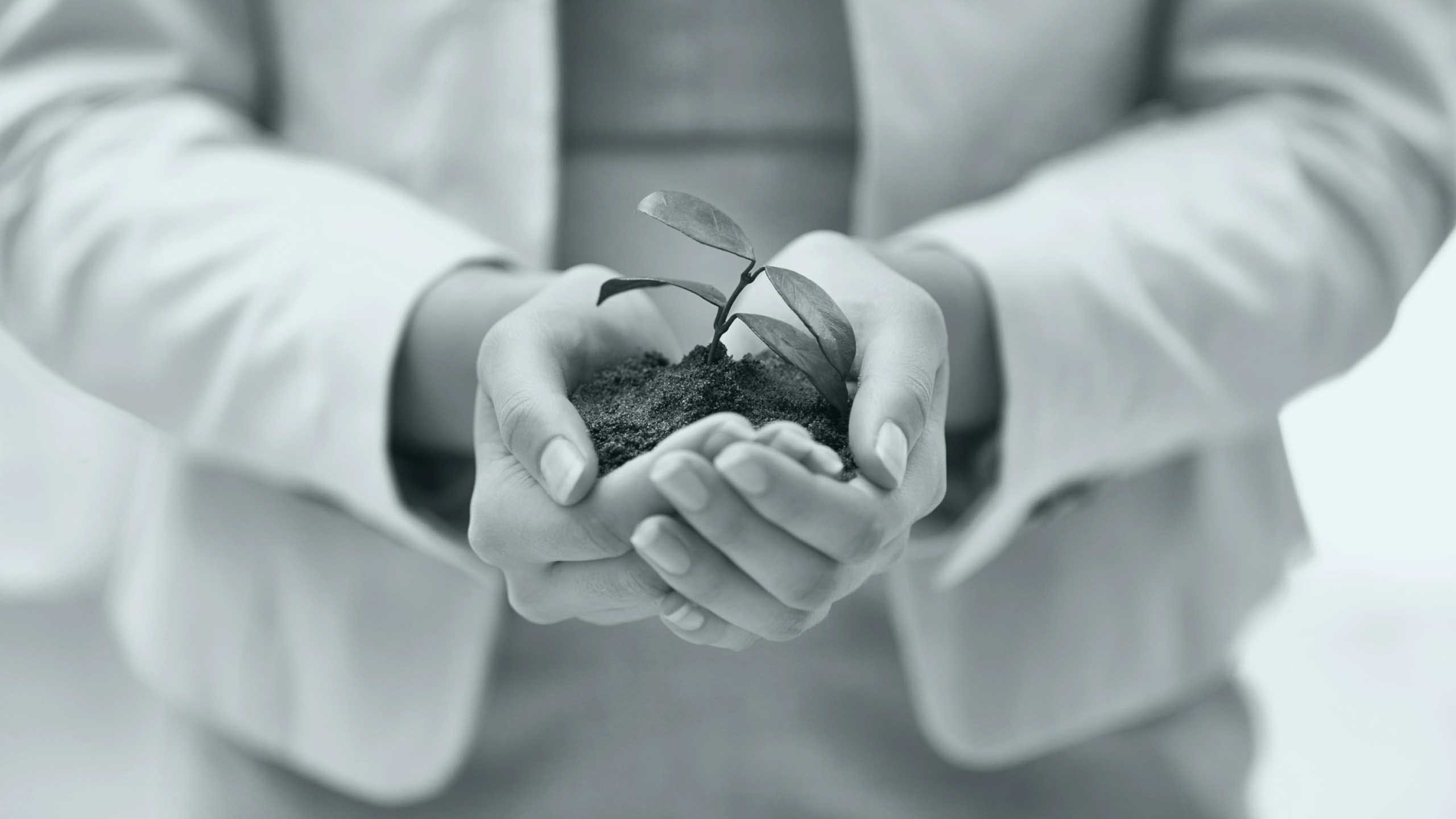 Cropped shot of a hands holding a budding plant