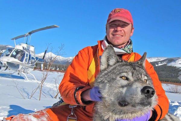 Dan Stahler with a wolf