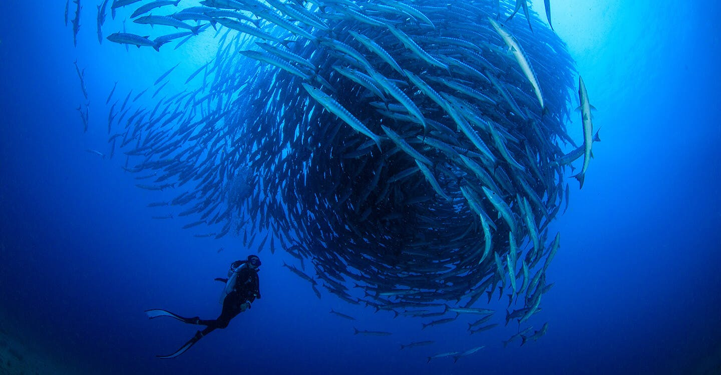 Diver with fish
