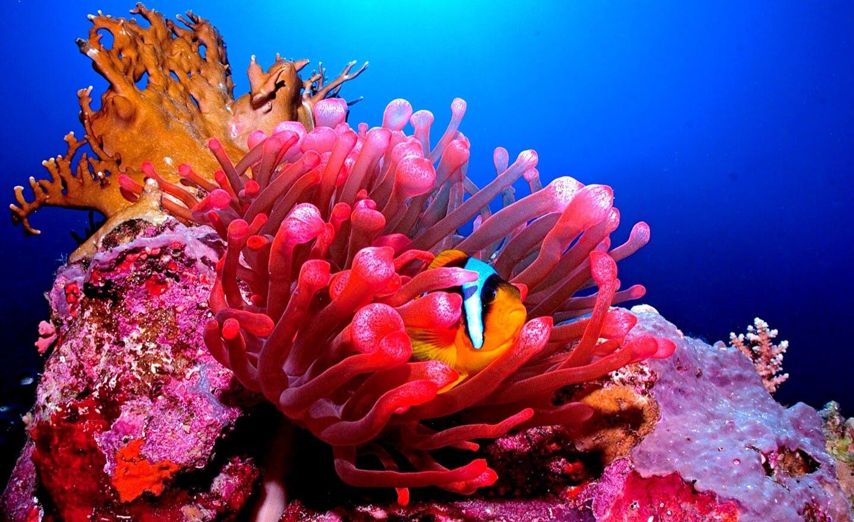 Fish hidden in corals