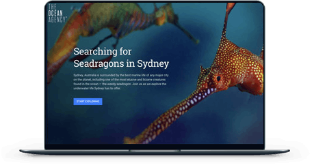 Searching for Seadragons in Sydney screen mockup
