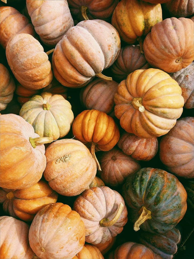 A pile of orange, yellow, and green pumpkins.