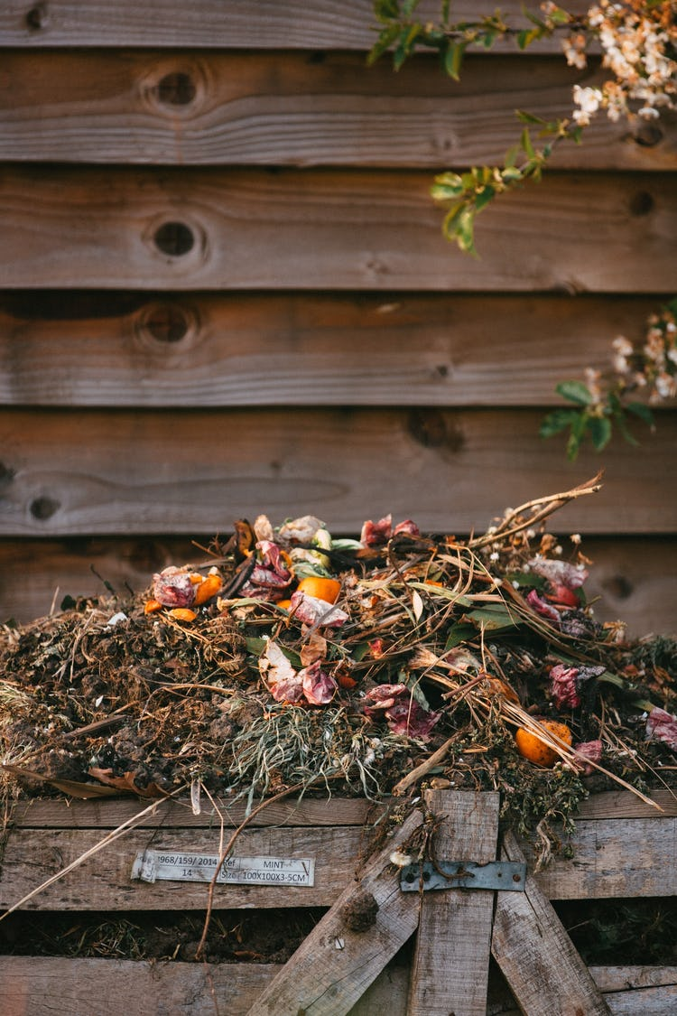 bunch of dried flowers and branches