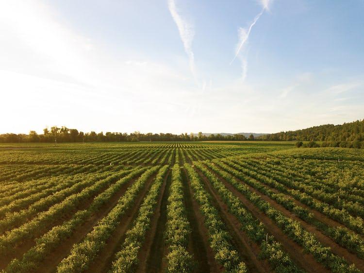 image of farm