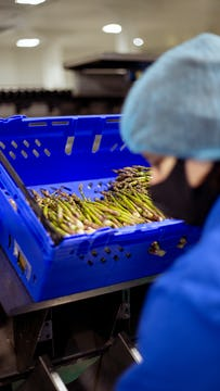 blue container of asparagus being processed by a female whos wearinb black face mask, blue shirt and light blue hairnet