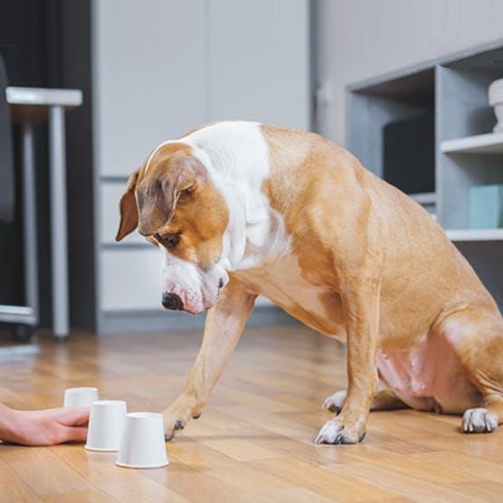 該準備寵物基金還是寵物保險?