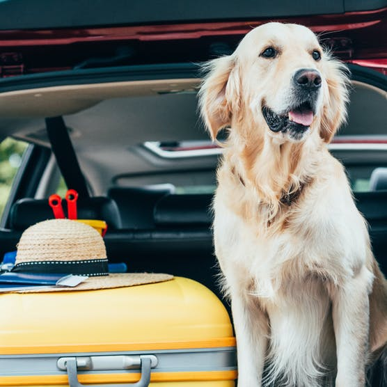 Moving abroad? A guide to emigrating with pets