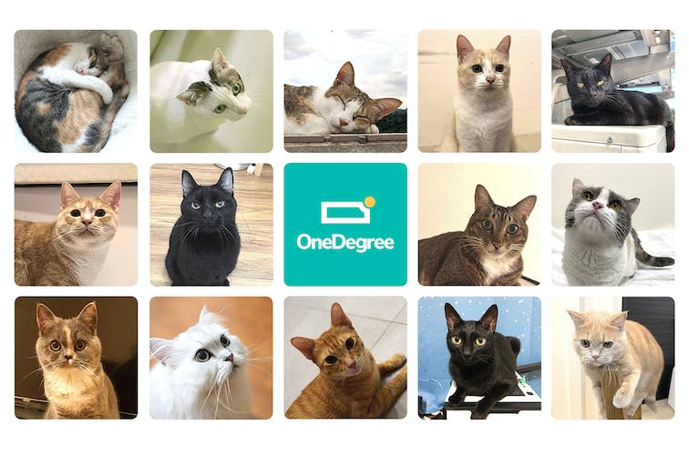 OneDegree relaxes microchip requirement for cats, enabling more pets and their owners to benefit from pet health insurance