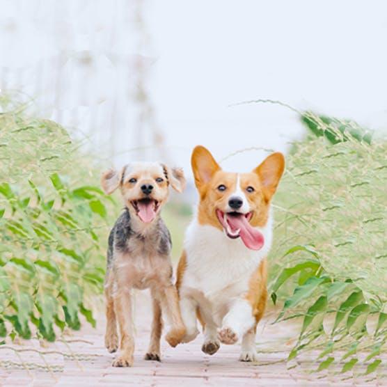When should you buy pet insurance?