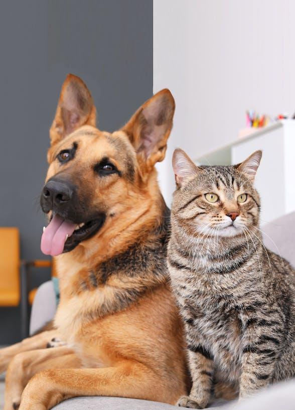 香港寵物保險比較(上篇)