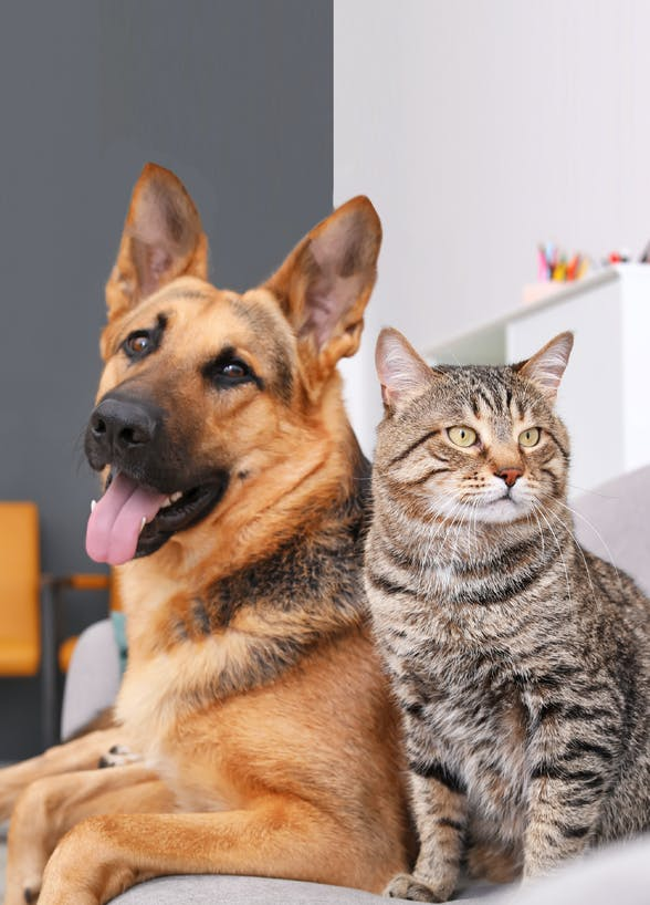 Compare Pet Insurance in Hong Kong (Part 1)
