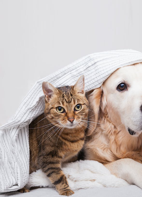 Compare Pet Insurance in Hong Kong (Part 2)