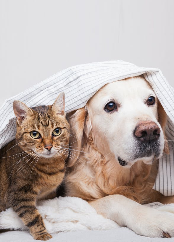 香港寵物保險比較(下篇)