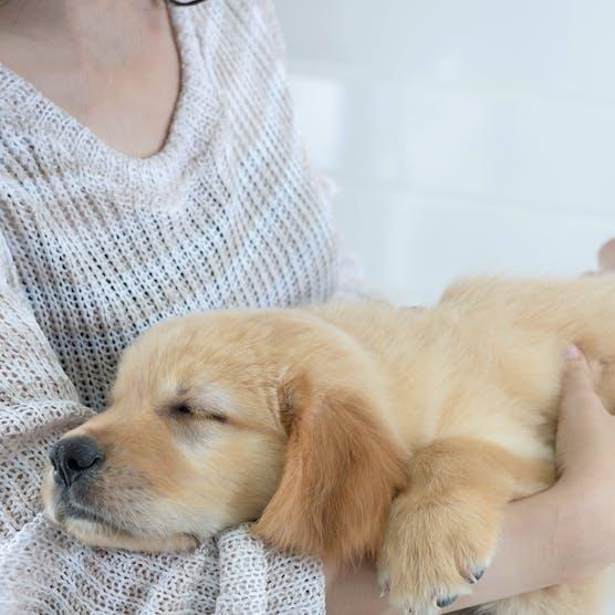 如何預防狗狗常見健康問題?