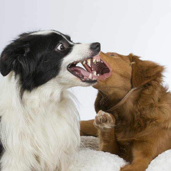 How to stop dogs from fighting