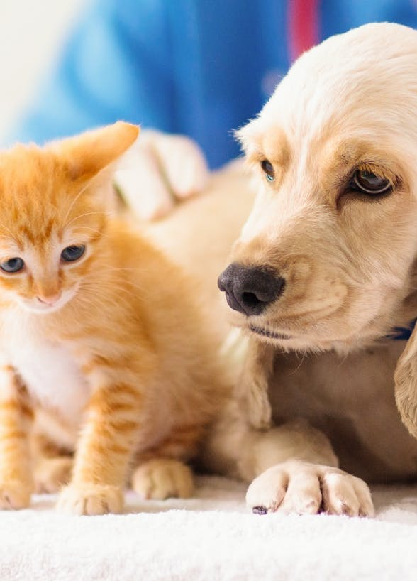 24-Hour animal hospitals and clinics in Hong Kong