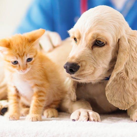 24小時寵物診所一覽