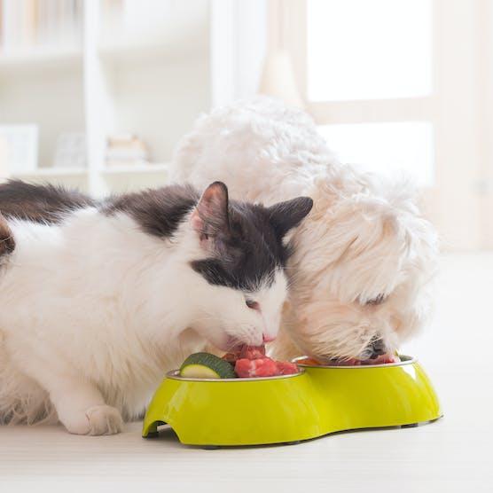貓狗鮮食入門知識