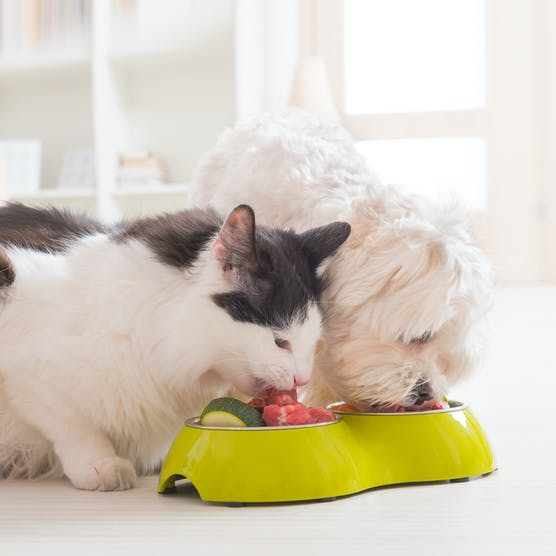 Cooking for your pet: Benefits of fresh food diet & what you should know