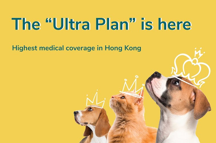 OneDegree now offers the highest pet medical coverage in Hong Kong with new Pawfect Care plan