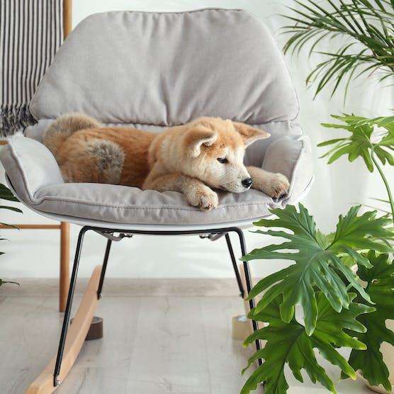 你知道哪些盆栽對寵物有害嗎?