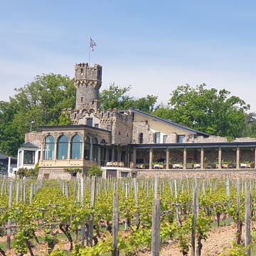 castle vineyard Rheingau