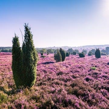 Lueneburg Heath landscape