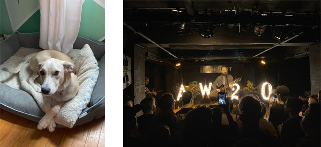 dog in dog bed (left) live music (right)