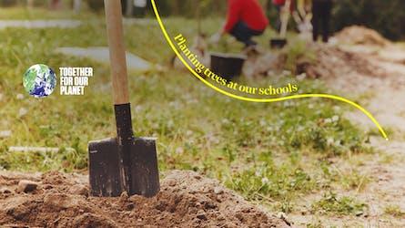 Trees for schools