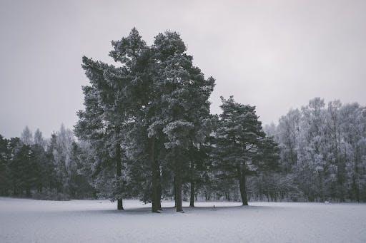 Trees covered in snow, Ekeberg, Norway