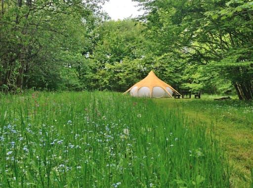 Tält på en grönskande äng i skog