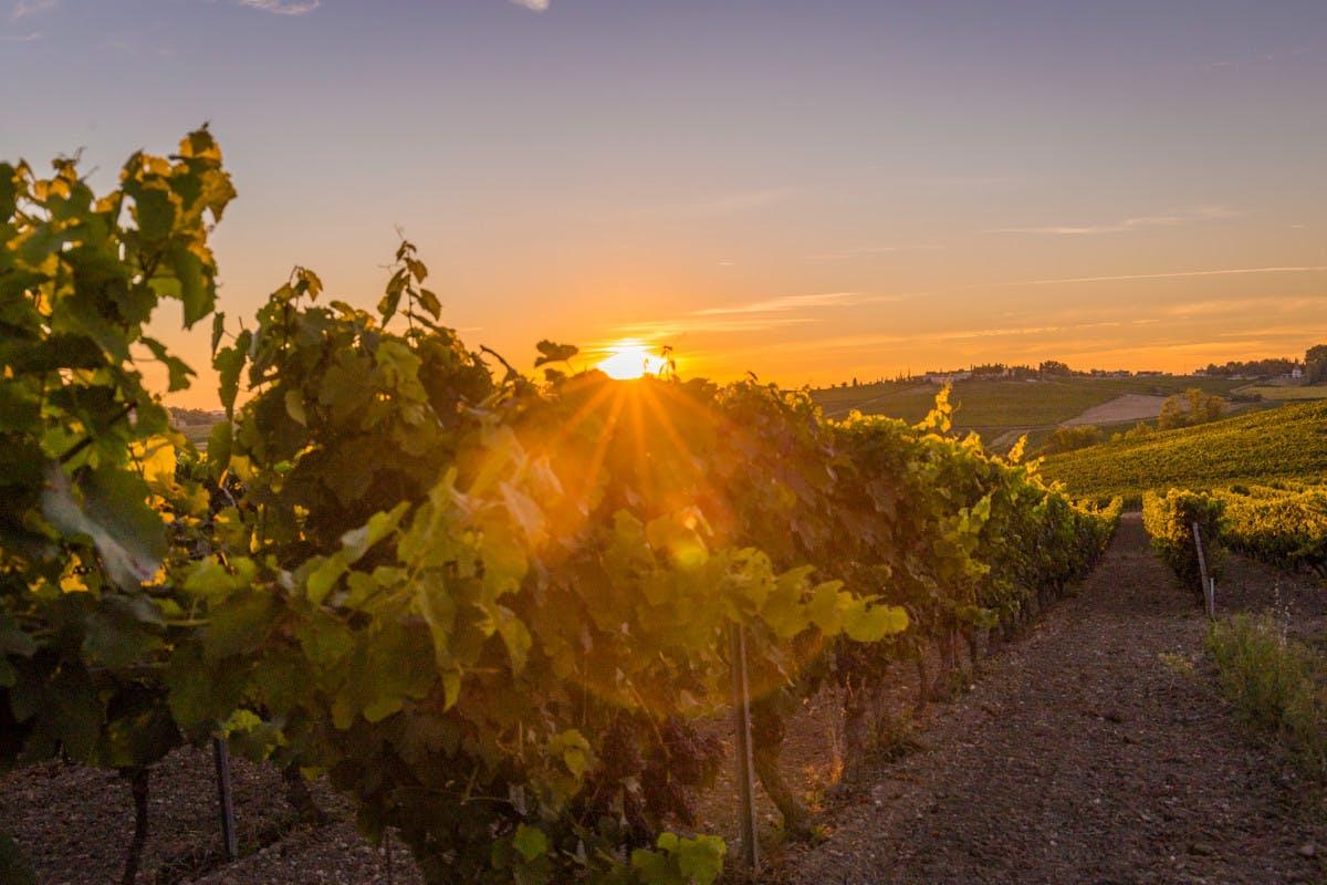 Coucher de soleil sur le vignoble du Gaillac