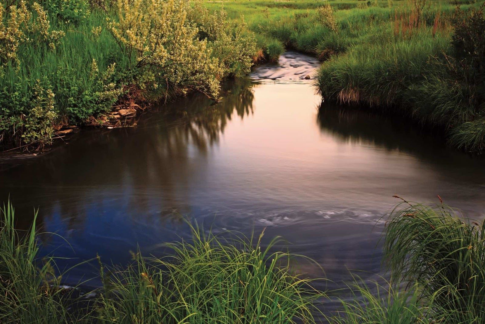 Peaceful pond near Sage Meadows