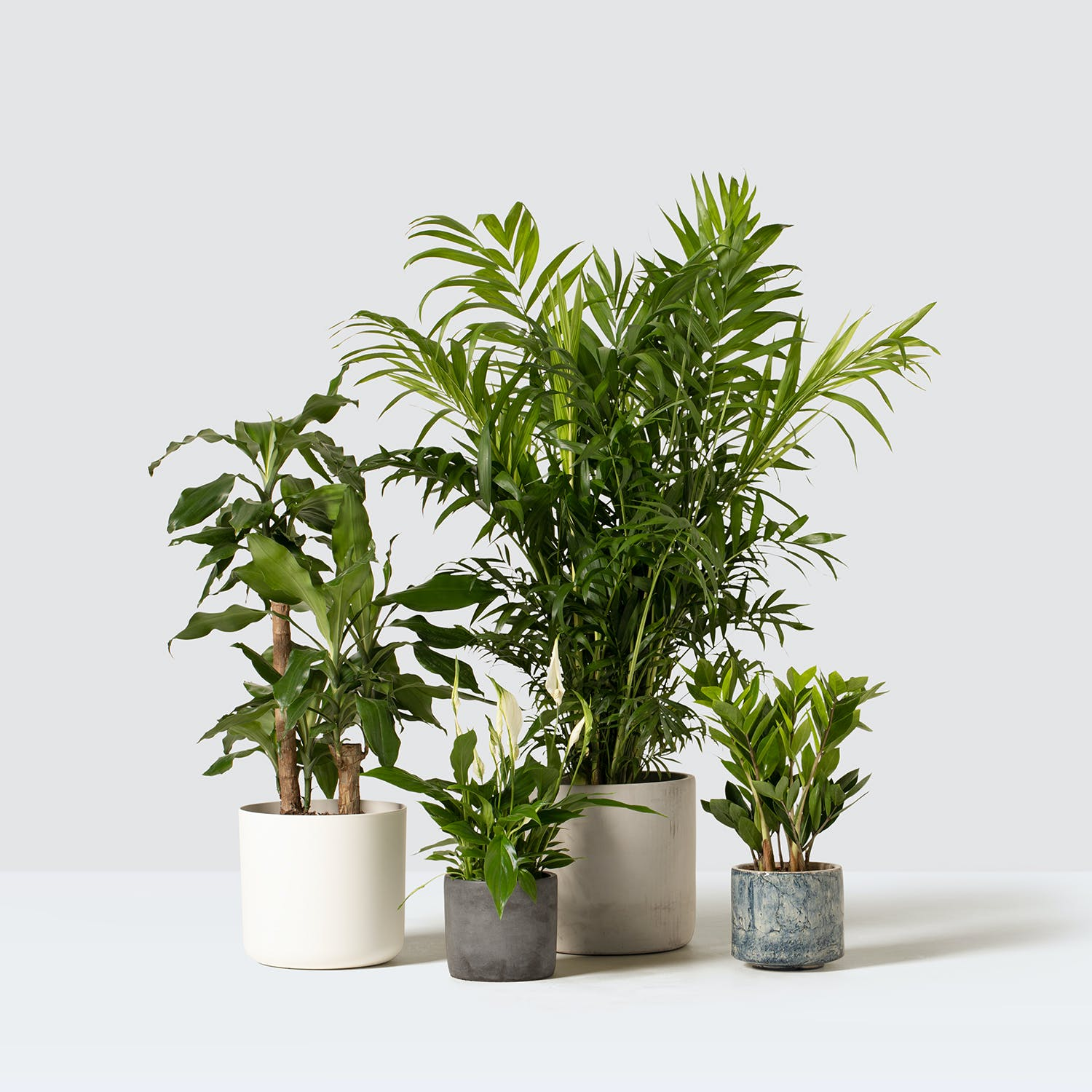 Plants made easy