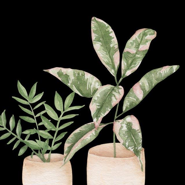 print of 2 houseplants by laurel cabrera