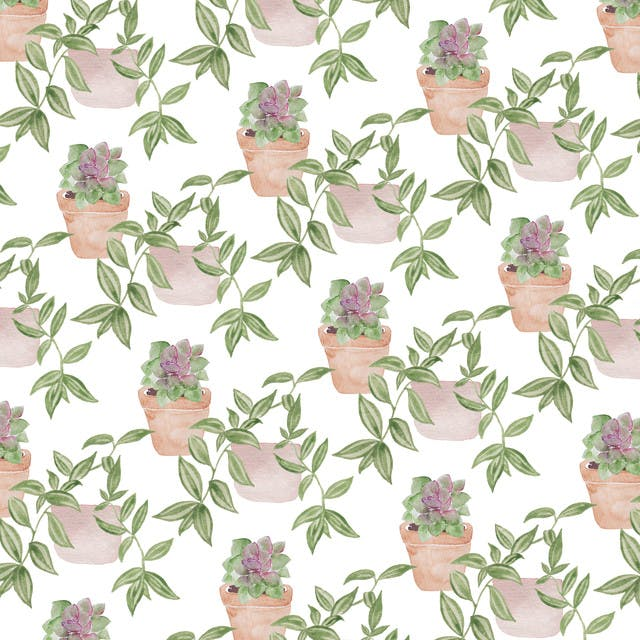 print of houseplants and succulents by laurel cabrera