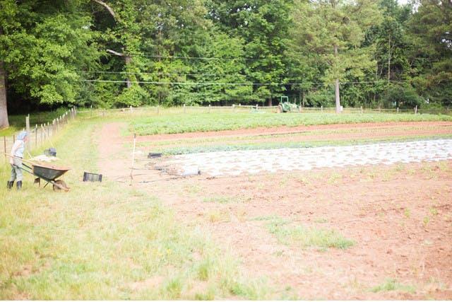 Hungry Heart Farm In Atlanta, Local Small Scale Farming. Mary Rigdon Women Farmers