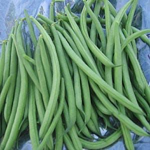 Filet Beans