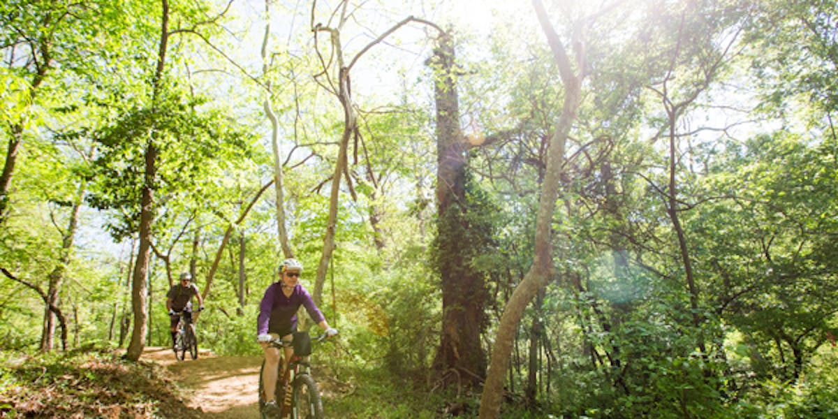 Mountain bikes on sunny path in forest
