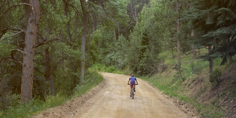 Mountain biker on logging road