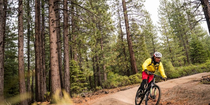 eMTB riding in a pine forest