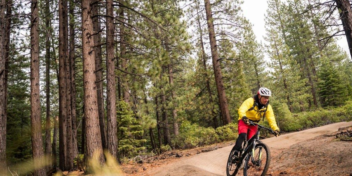 Mountain biker in pine forest