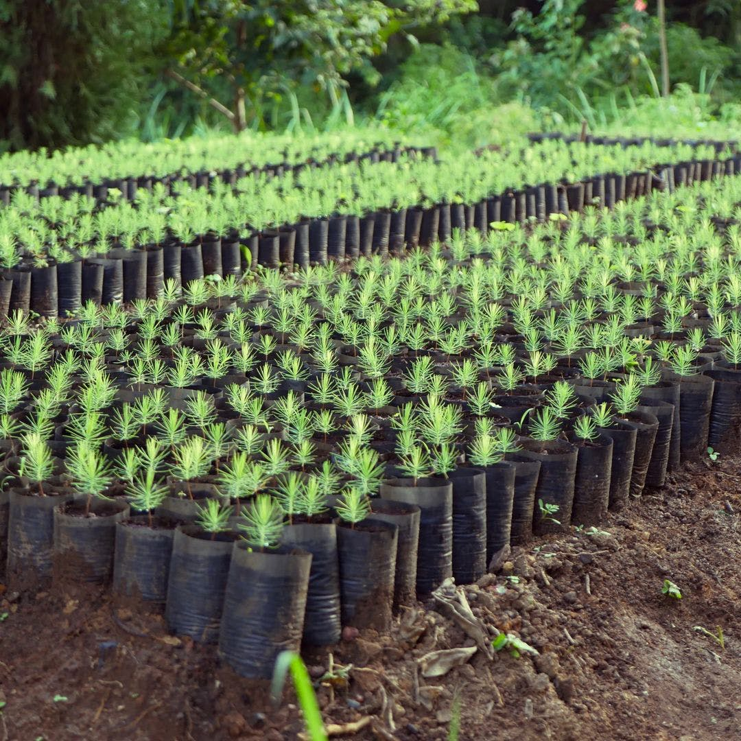 Instagram- @Ecosia Caption: Some of the trees your searches help us plant start their life in this Tanzanian nursery