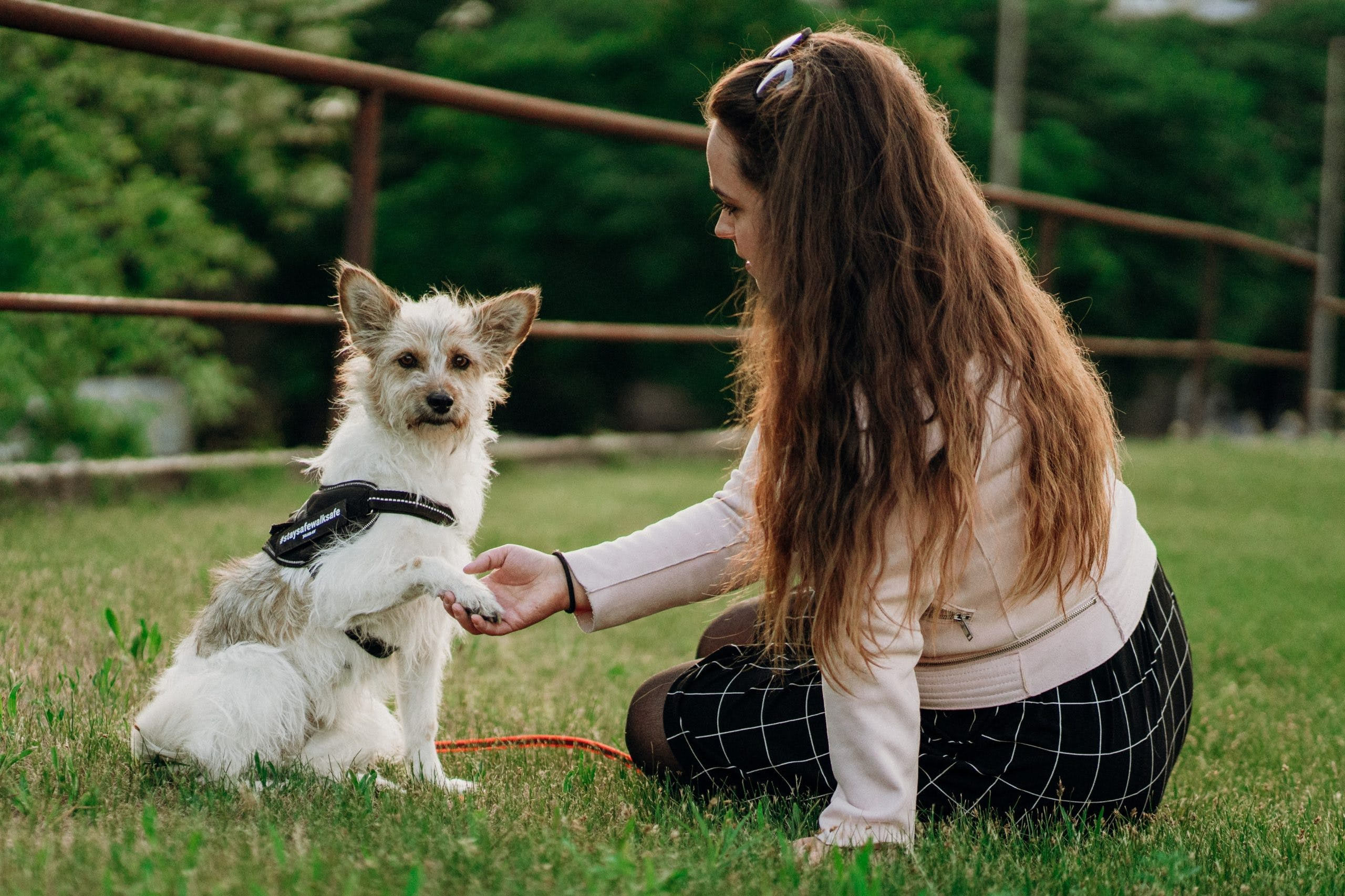 Consider These 11 Things Before You Bring a Dog Home