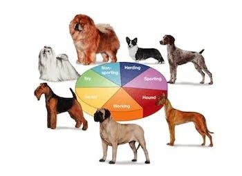 AKC Dog Breed Groups