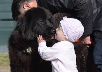 Baby and a large dog