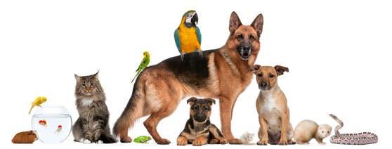 animaux-de-compagnie
