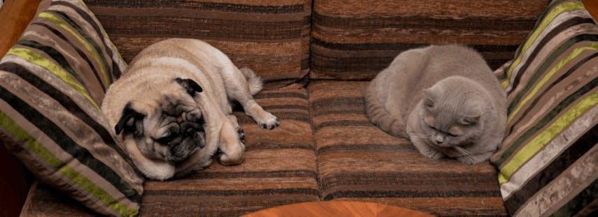 chien-et-chat-sur-un-canapé